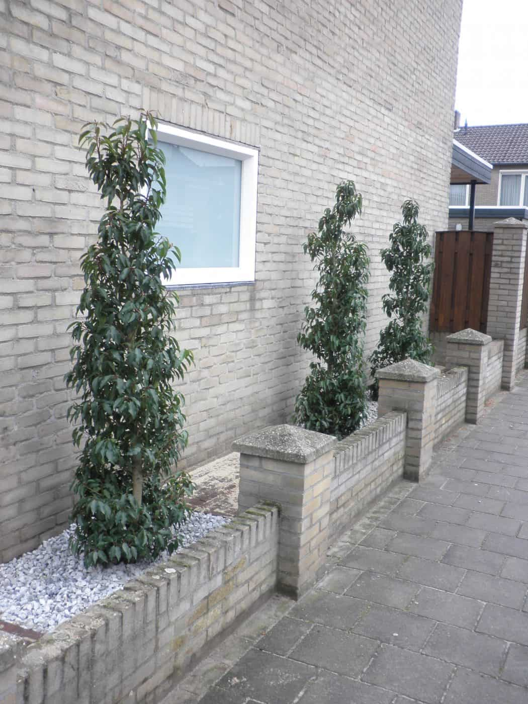 Van de Schoot Hoveniers groenblijvende zuil vorm